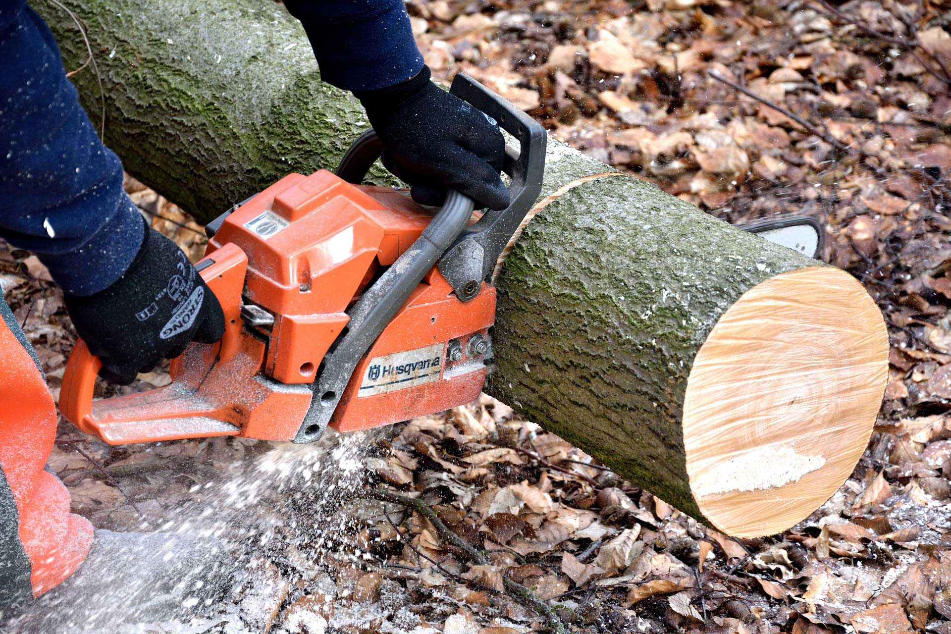 Bucks County Tree Work